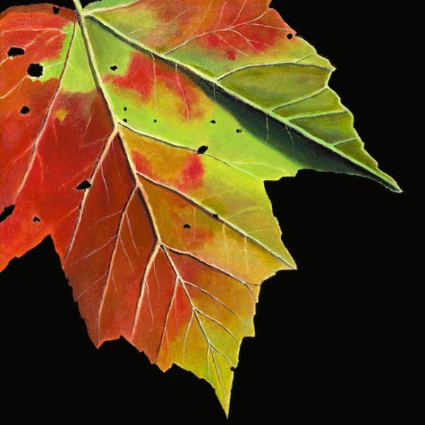 Autumn Maple Leaf 20x20.jpg